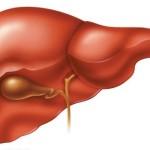 Các bệnh ở gan